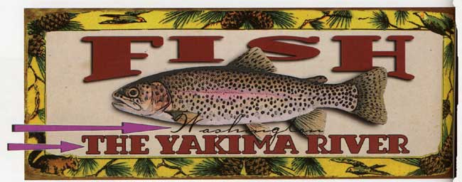 Custom Fish Sign