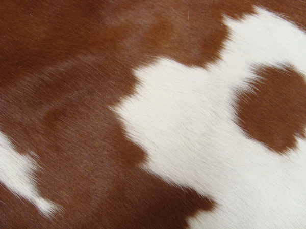 Brown and White Hair on Hide Leather