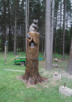 Raccoon Chainsaw Carving